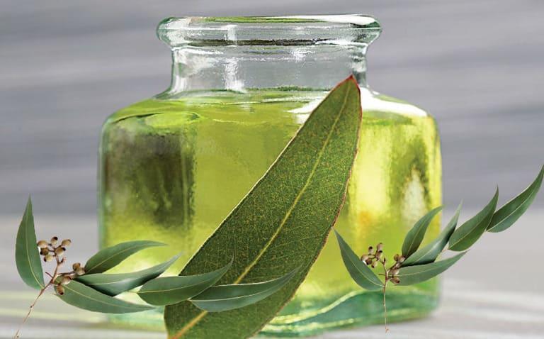 Khi dùng dầu khuynh diệp chữa ê buốt răng, bạn không được uống.