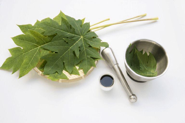 Sử dụng lá đu đủ tươi để trị bệnh đau dạ dày