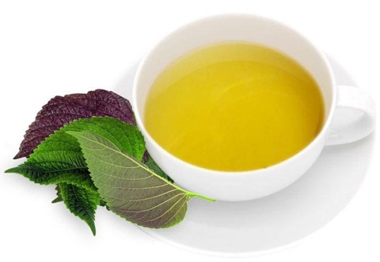 Uống nước lá tía tô giảm mề đay mẩn ngứa