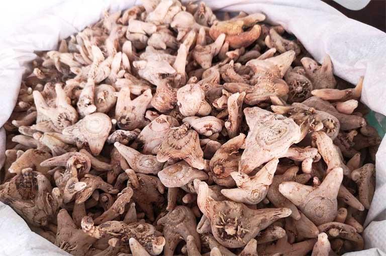 Dược liệu Bạch cập thường sử dụng ở dạng bột để hoàn thành viên, sắc lấy nước dùng hoặc để đắp ngoài