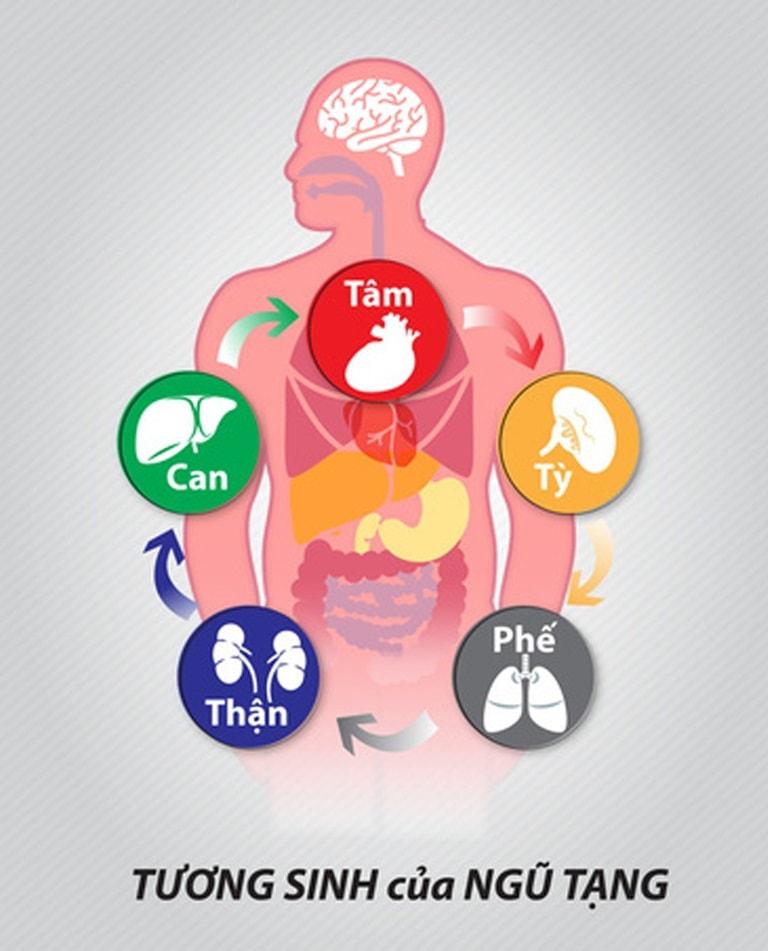 Thận là một trong ngũ tạng có ảnh hưởng trực tiếp tới sinh lý cơ thể người