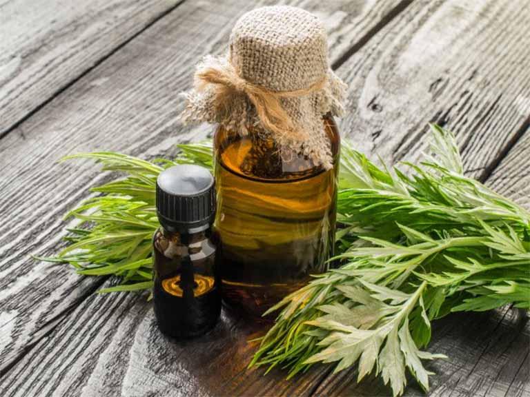 Trong lá cây ngải cứu có chứa một số thành phần tinh dầu có thể làm ảnh hưởng đến chức năng gan, các đối tượng bị suy giảm chức năng gan cần thận trọng khi sử dụng