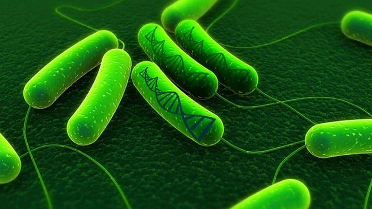 Những bệnh lý đường tiêu hóa chủ yếu gây ra bởi vi khuẩn HP
