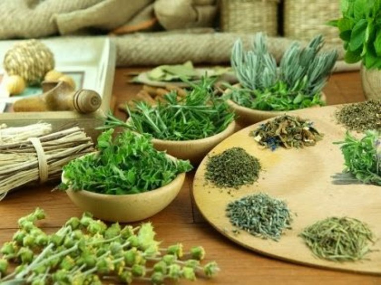 Sử dụng các loại dược liệu dễ kiếm quanh nhà để điều trị ngứa ngoài da rất an toàn và lành tính