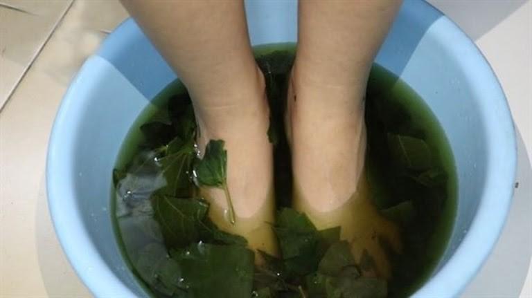 Đun nước lá lốt để ngâm các bộ phận trên cơ thể bị dị ứng thời tiết