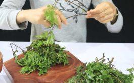 Cách chữa gai cột sống bằng thuốc Nam