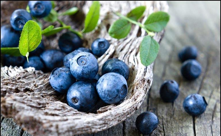 Việt quất là trái cây có tác dụng rất tốt đối với những người bị gan nhiễm mỡ