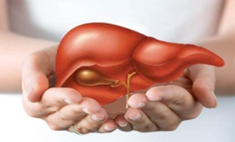 Men gan tăng cao khiến gan bị tổn thương và có thể gây ra nhiều biến chứng nguy hiểm