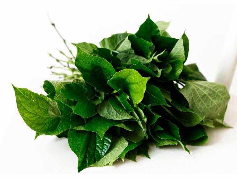Dùng lá lốt chữa bệnh gout sẽ giúp đẩy lùi tình trạng đau nhức, viêm sưng do bệnh gây ra
