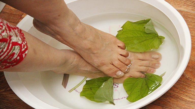Dùng lá lốt nấu nước ngâm chân hỗ trợ cải thiện triệu chứng do gout gây ra