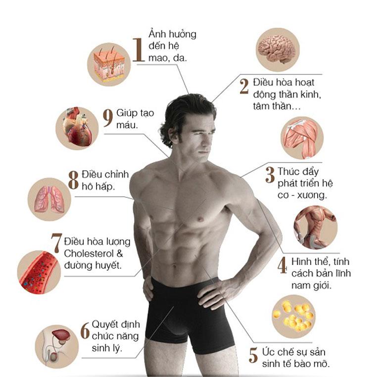 Vai trò của testosterone đối với cơ thể nam giới
