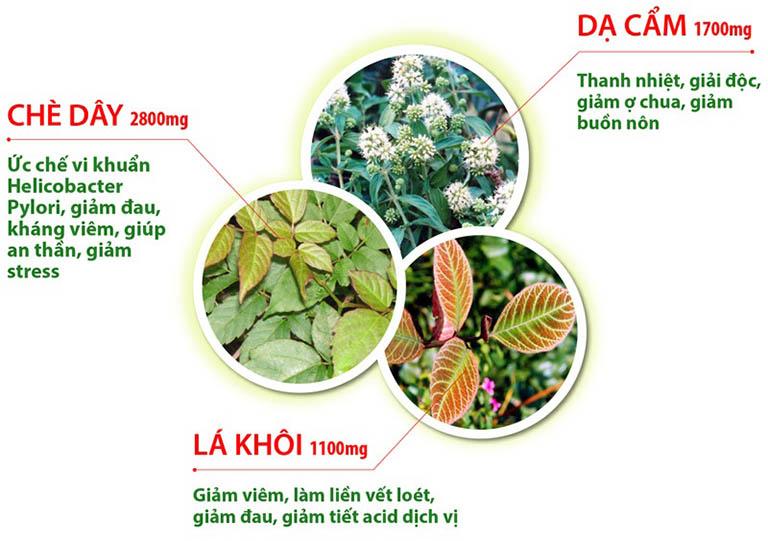 Thành phần các loại chủ dược trong bài thuốc dạ dày