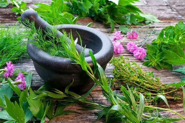 Các loại thảo dược thiên nhiên quen thuộc, rẻ tiền giúp hạ men gan