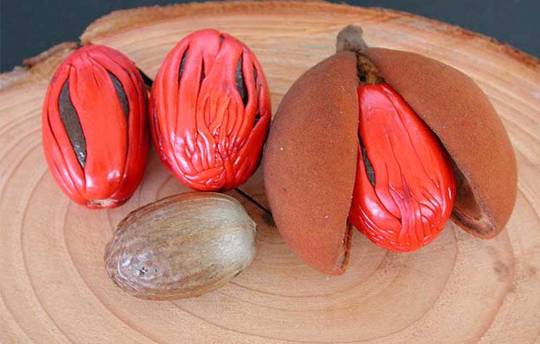 Hạt nhục đậu khấu là một trong những loại thảo dược tăng cường sinh lý nữ