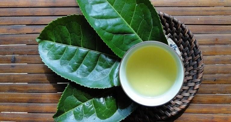 Uống nước trà xanh pha loãng cũng có tác dụng giải độc, mát gan