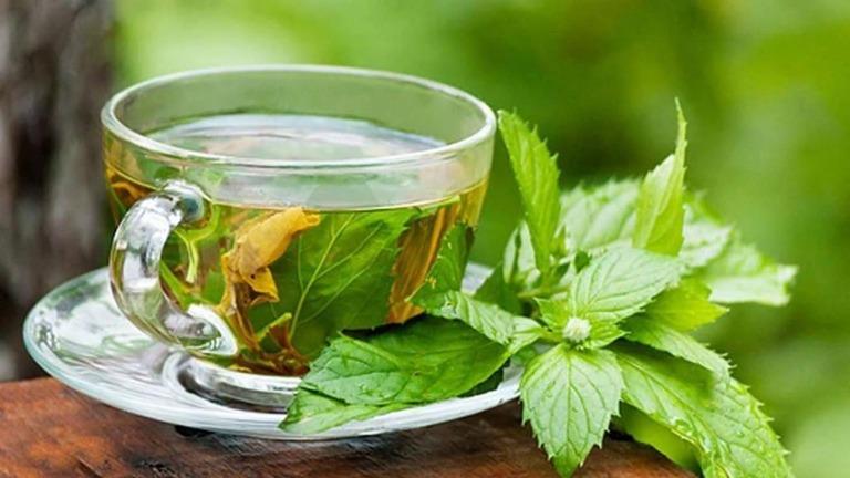 Các cây thuốc nam chữa xơ gan cổ trướng phổ biến