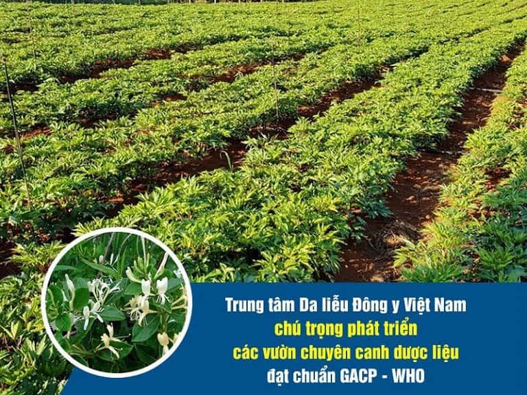 Trung tâm Da liễu Đông y Việt Nam rất chú trọng tới thành phần bào chế ra bài thuốc