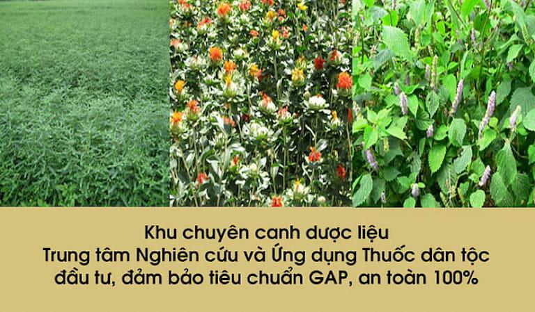 Hình ảnh một trong những vườn dược liệu của Trung tâm Thuốc dân tộc