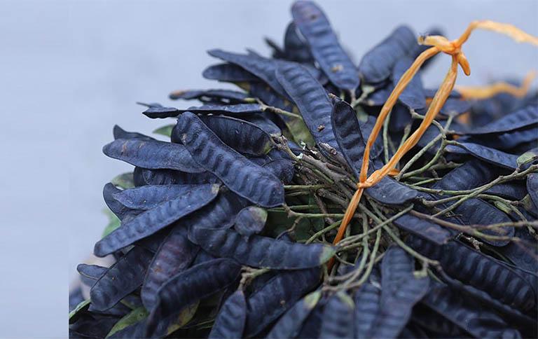 Bài thuốc sử dụng bồ kết giúp tóc đen, óng mượt và chống gãy rụng