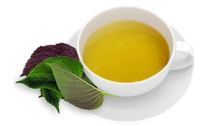 Uống nước lá tía tô giúp thúc đẩy nhanh quá trình đào thải axit uric dư thừa trong máu ra khỏi cơ thể