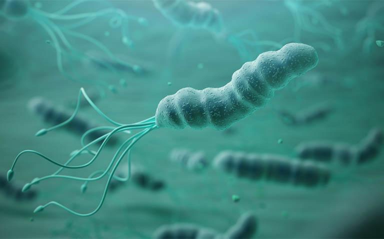 Thời gian sống của vi khuẩn Hp trong không khí khoảng 60 phút dến 4 giờ