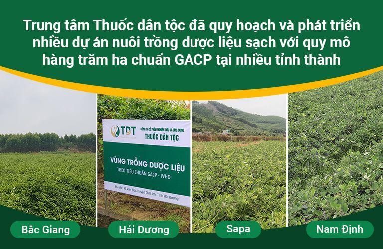 Vườn dược liệu sạch 100% với quy mô hàng nghìn hecta
