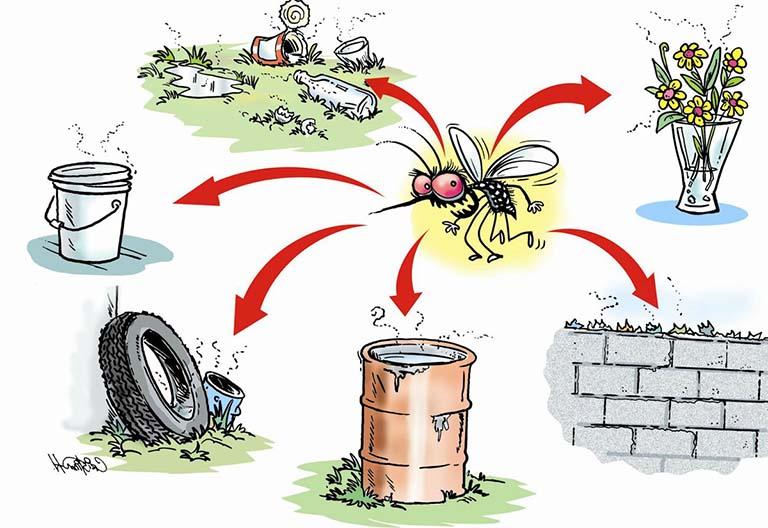Loại bỏ nơi trú đậu và sinh sản của muỗi, diệt bọ gậy/ lăng quăng