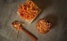 6 cách sử dụng đông trùng hạ thảo khô hiệu quả nhất