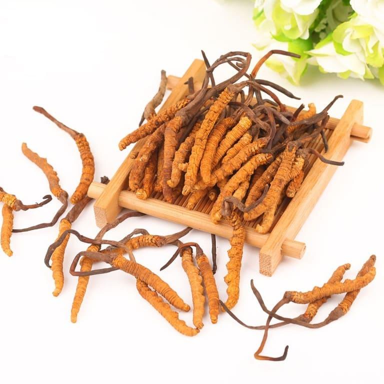 Đông trùng hạ thảo nguyên con Tây Tạng với hàm lượng dưỡng chất cao nhất cực quý hiếm trong tự nhiên
