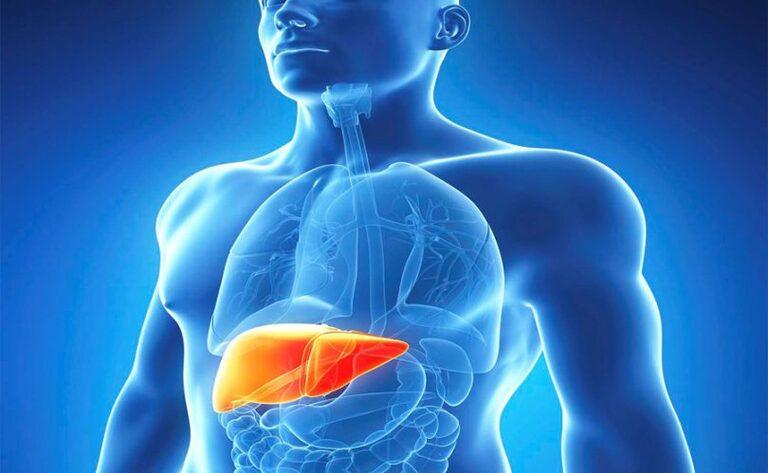 Người bị các bệnh liên quan đến gan thì không nên dùng rượu đông trùng nhân sâm mà nên dùng đông trùng theo cách khác