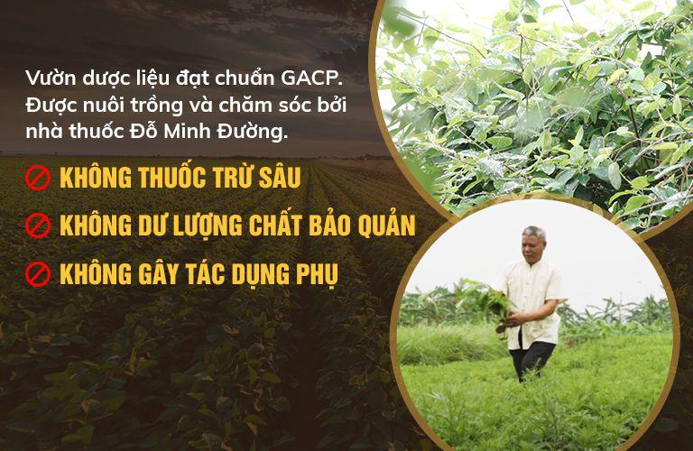 vườn dược liệu sạch của Đỗ Minh Đường đạt tiêu chuẩn GACP - WHO của Bộ Y tế