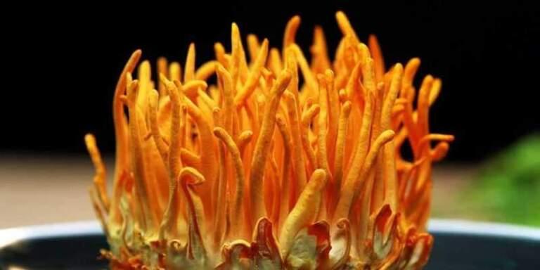 Đông trùng hạ thảo tại Đà Nẵng loại khô, tươi, ký chủ... có nhiều công dụng cho sức khỏe