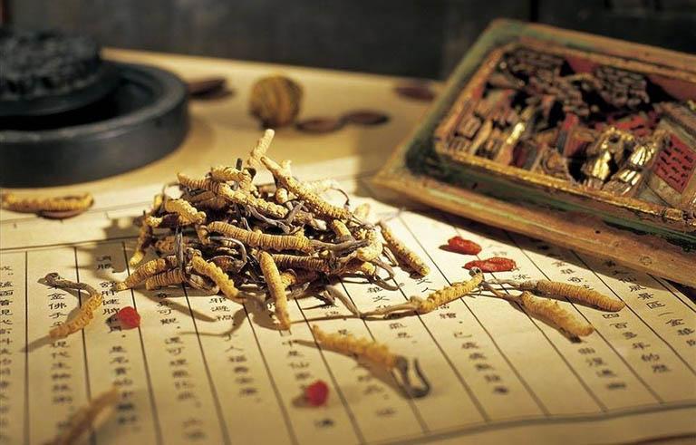 Trùng thảo khô có nhiều công dụng đối với sức khỏe