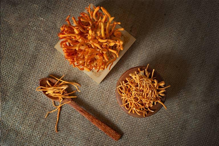 Đông trùng hạ thảo được nuôi trồng tại Việt Nam