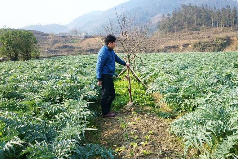 Vườn trồng dược liệu đạt chuẩn GACP-WHO của Quân dân 102