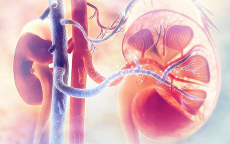 Kể cả người già, trẻ em,...bị viêm cầu thận đều có thể sử dụng bài thuốc nam Đỗ Minh Đường