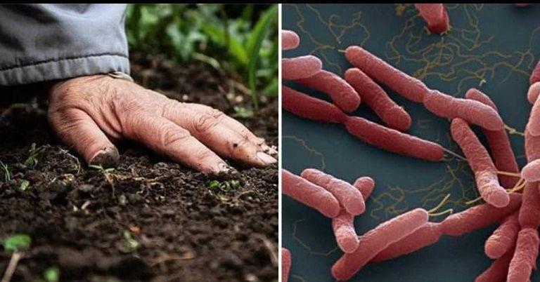 Nhiễm trùng cũng là 1 trong những nguyên nhân hàng đầu gây bệnh